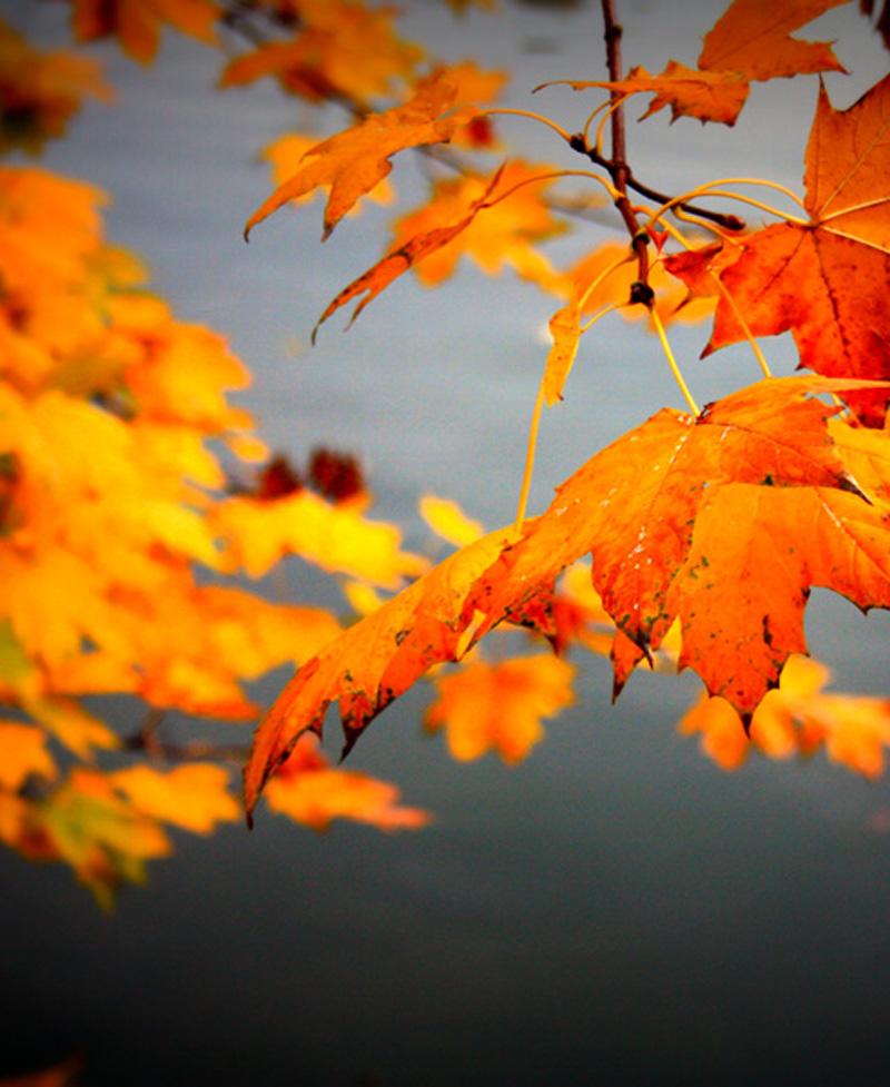 Herbstlaub, Fotografie, Sabine Mannheims Kunst aus Nuernberg